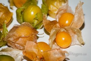 jeff-ground-cherries-close-in